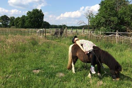 Felder, Wald und Pferde - Entspannung im Wendland! - Lüchow