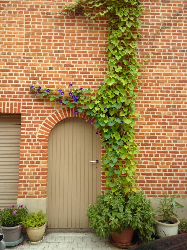 climbing flower entrance