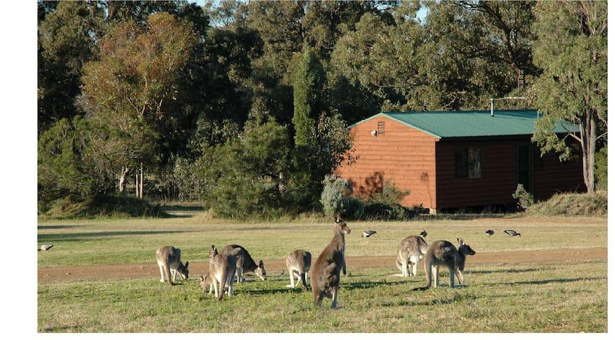 Kangaroos at Dusk & Dawn