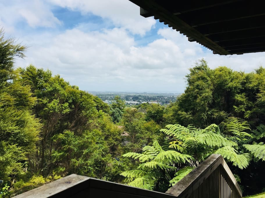 Native bush view over Southern Auckland,stunning.
