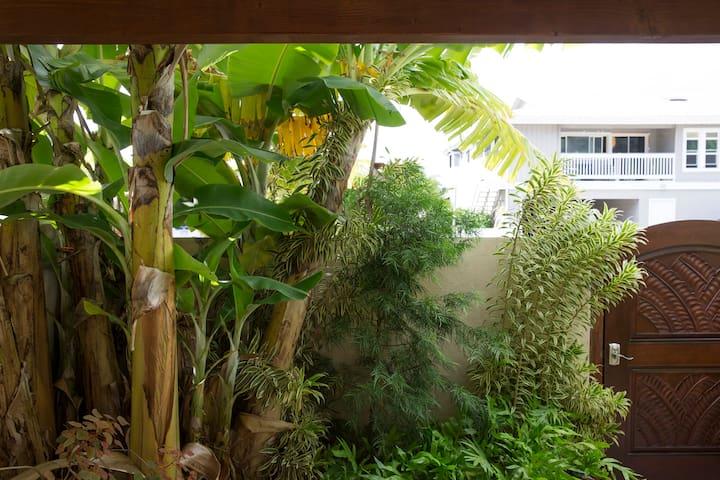 Very tropical yard.