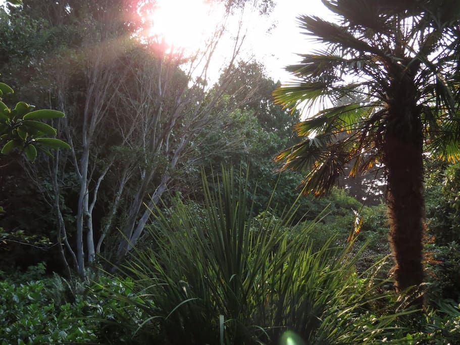 Eucalyptus and Palm Trees in the garden