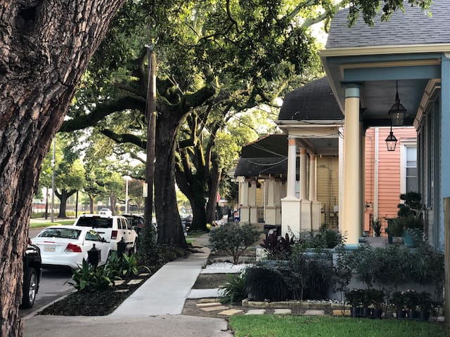 The canopy of oak trees lining the street in front of our house were established in the antebellum era. The race course across the street is a thoroughbred racetrack and the second oldest site of horseracing in America still in operation.