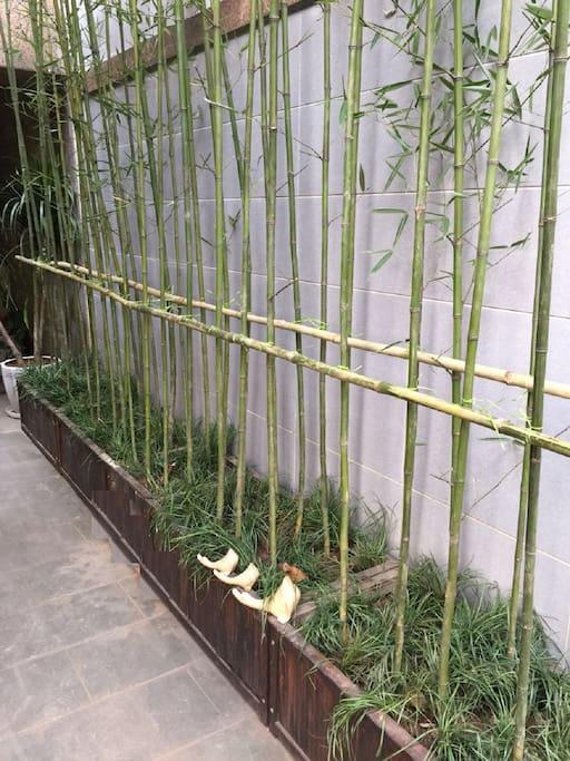 花园加种植的竹子
