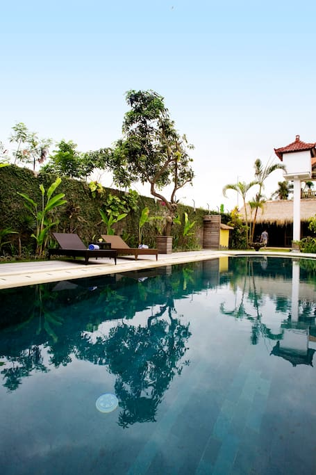 POOL 14m. x 3.5m sourandig of amazing tropical garden and full of more than 300 different kind of orkid