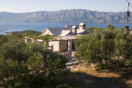 Dasen olive garden - Povlja
