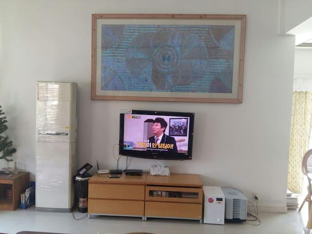 1층 티비 위에 브라질 나비3000마리