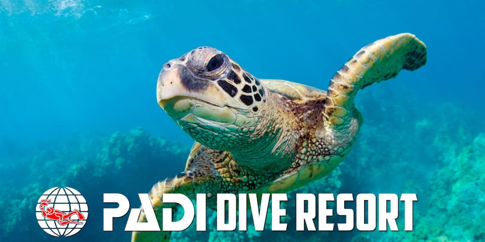 We're PADI certified!