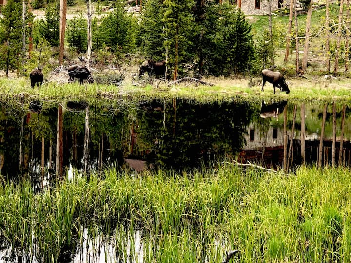 In the heart of the Grand Lake . Wild life