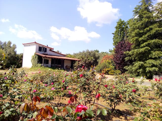 Beautiful cottage with a rose garden.