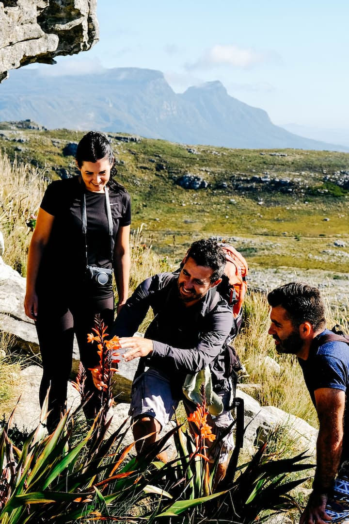 Learn about the Cape's beautiful Fynbos
