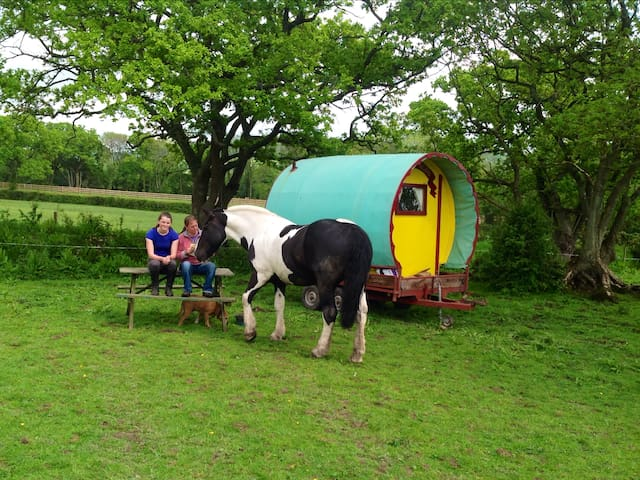 The Gypsy Caravan, Tritchmarsh Farm