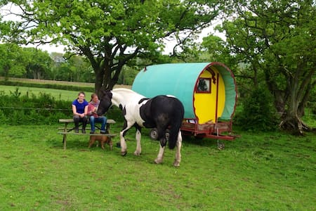 The Gypsy Caravan, Tritchmarsh Farm - Devon - Hut