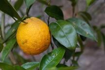 b&b antica limonaia.(Camera la palma)