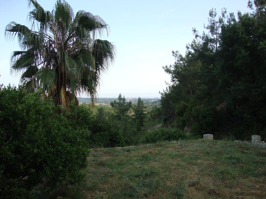 Landscape from veranda