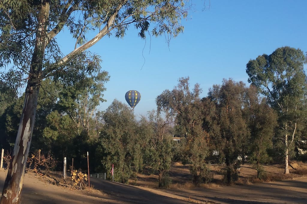 Balloon taking off in the morning between 7:00 & 10:00 from nearby winery when it's cool there's calm air!