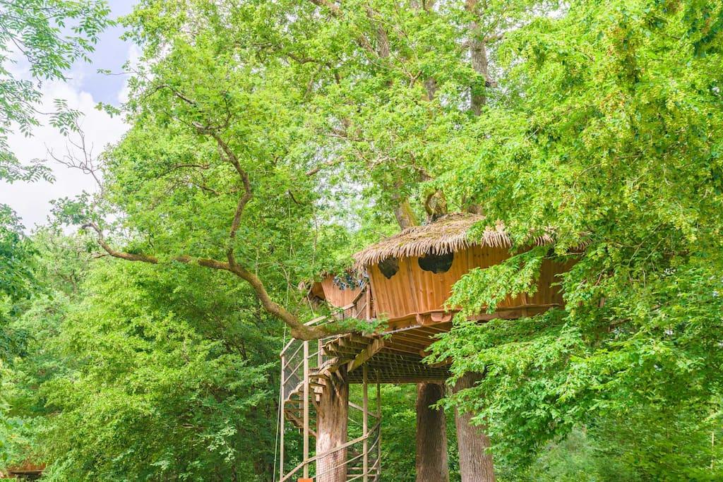 Cabane dans les arbres avec deux chambres