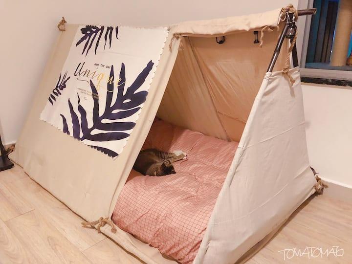 【草加Maid】手工少女双人帐篷 女生专门宿舍 可以有猫 南澳杨梅坑近较场尾