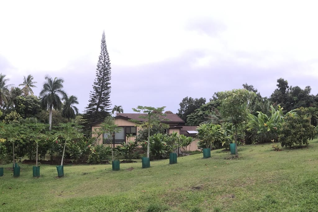 The back of the property.