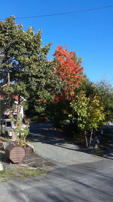 Foliage surrounds property