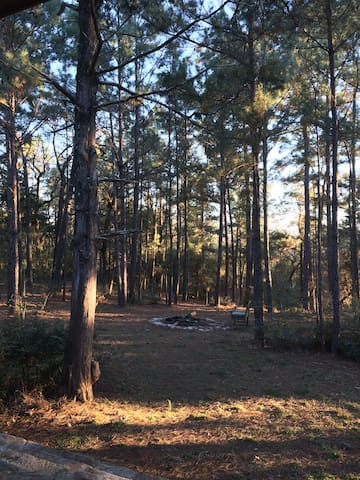 Nestled in the piney woods