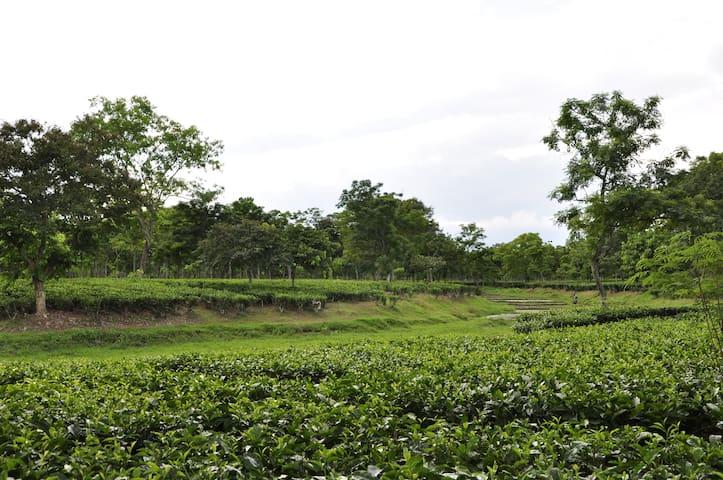 Plantations @ Sapoi