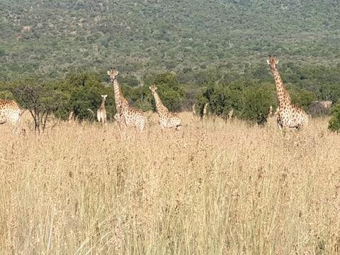 Exceptional Bushveld experience Northwest Province