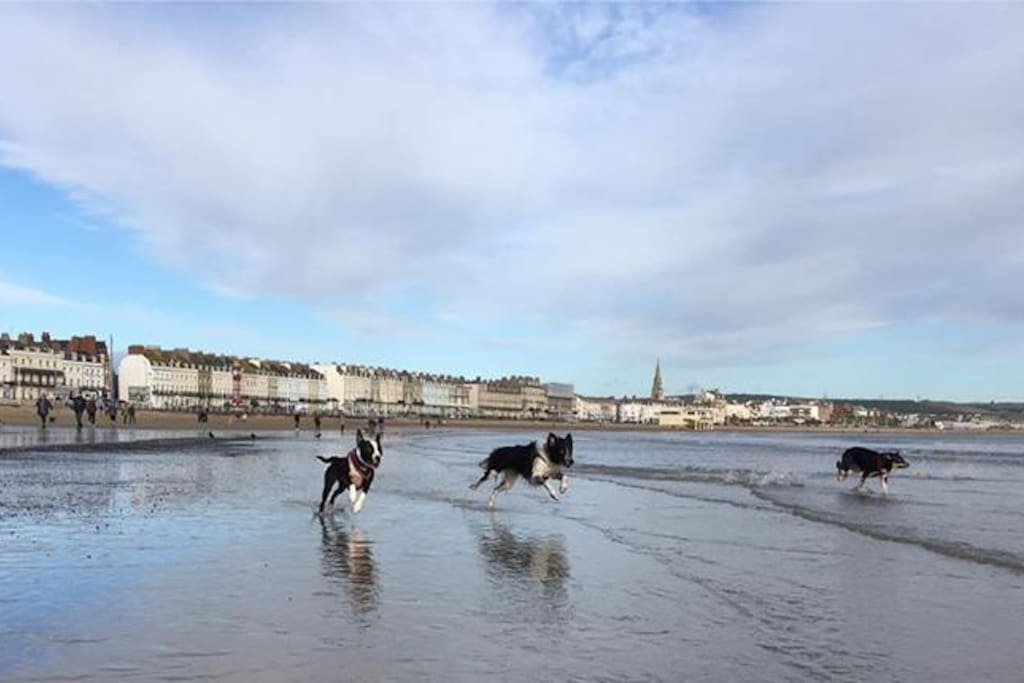 Dogs on Weymouth Beach