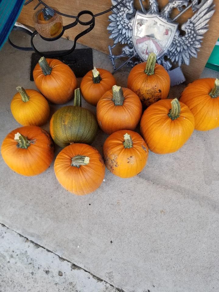 Roseville Sierra Gardens: Family & Friends Welcome