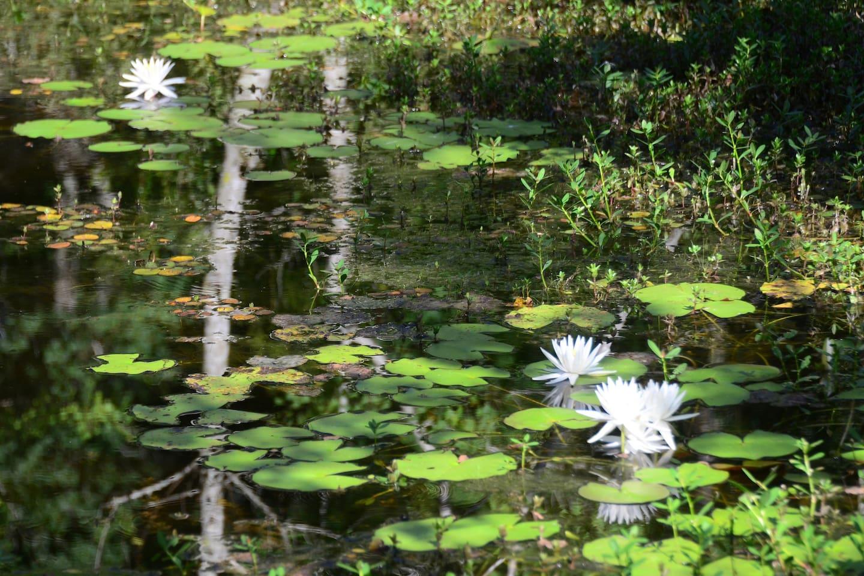 Pond in back field