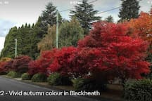 The autumn colours of Blackheath.