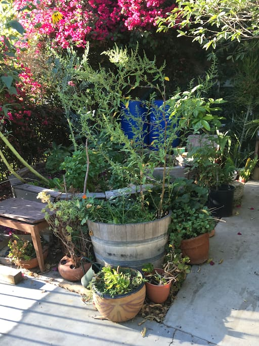 The front garden is a mix of herbs, edibles and succulents