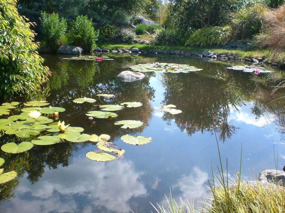 池塘里有青蛙在歌唱