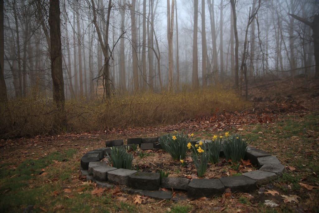 Front yard in early spring in the morning.