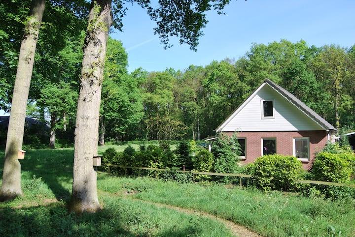 Vergaderhuisje in het bos