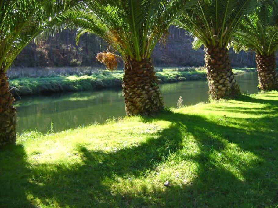 Jardín.Palmeras.Río