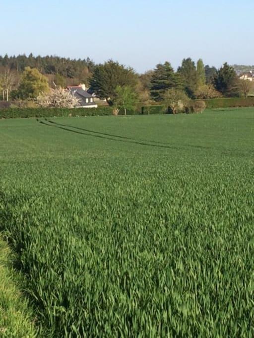 Ti Pesked temidden van de korenvelden