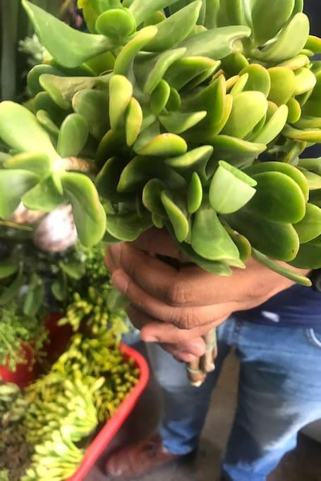Stemmed succulents from my fav vendor