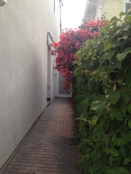The entrance right side of our house with our neighbor's bougainvillea