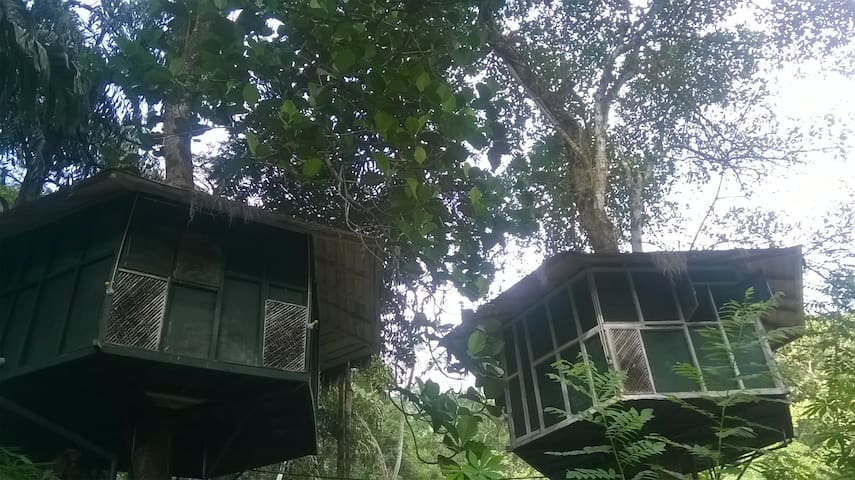 Kelani winds tree house
