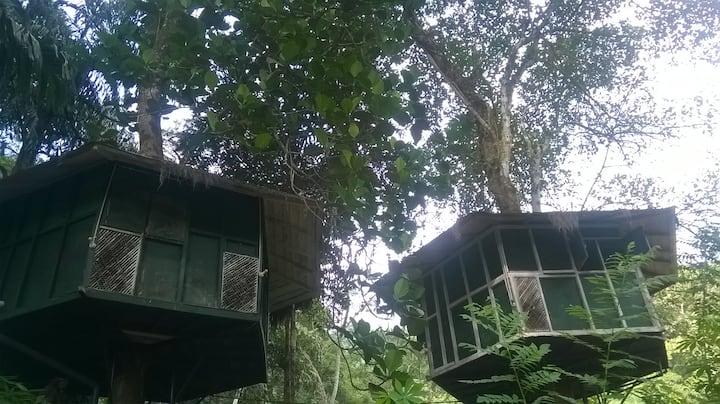 Kelani winds tree house