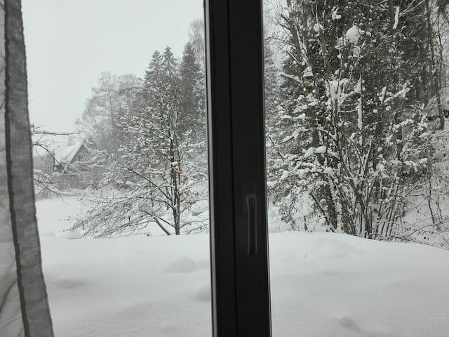 W zimowej szacie - widok z okna