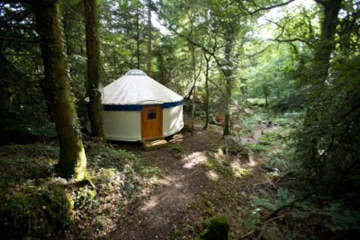 Large Yurt Secluded in a Natural Woodland