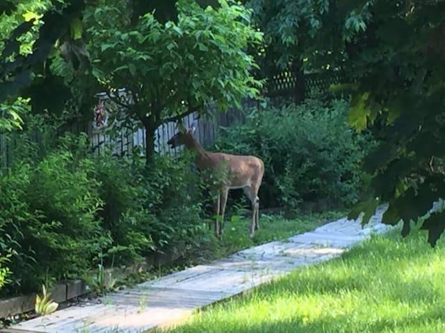 Backyard Wildlife