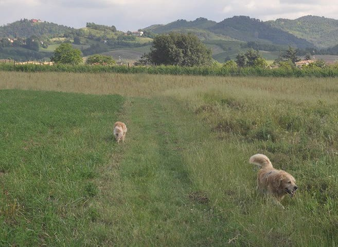 Monolocale nella campagna pavese