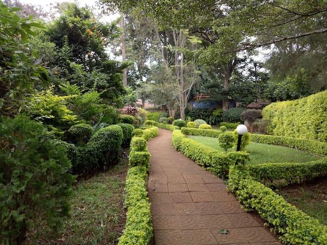 The Lone Tree Paradise