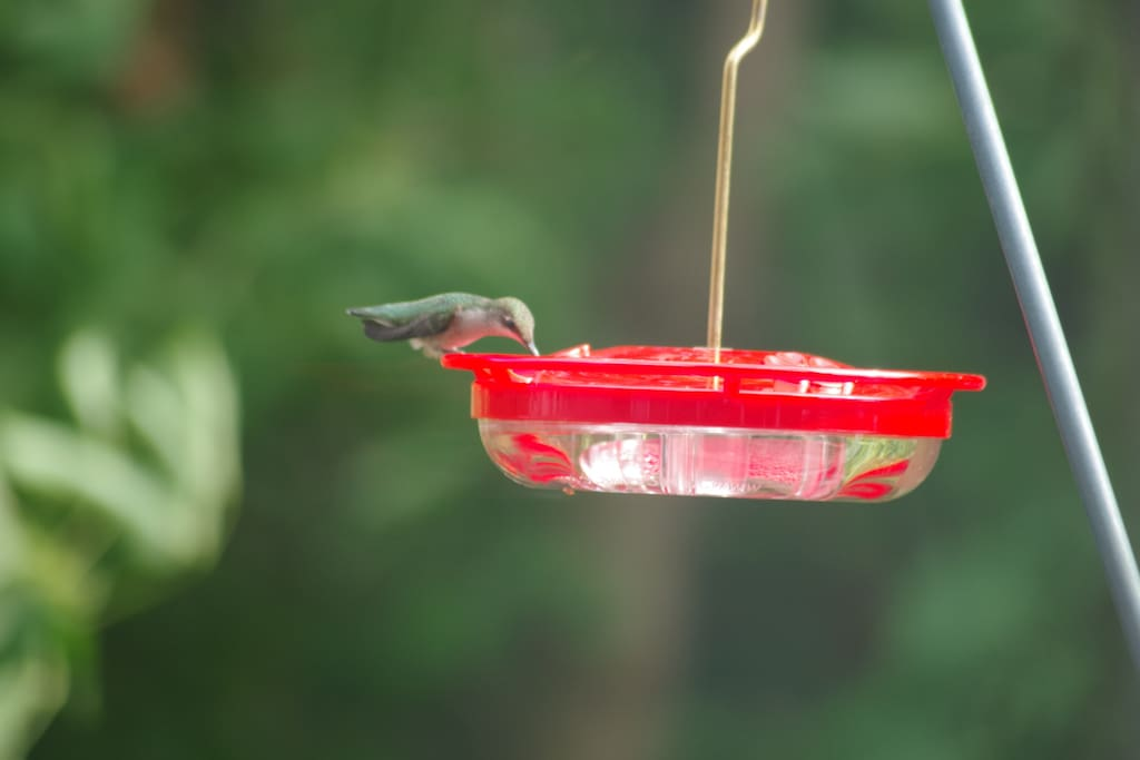 Visiting during the summer / fall months you may get to spot a hummingbird or two.