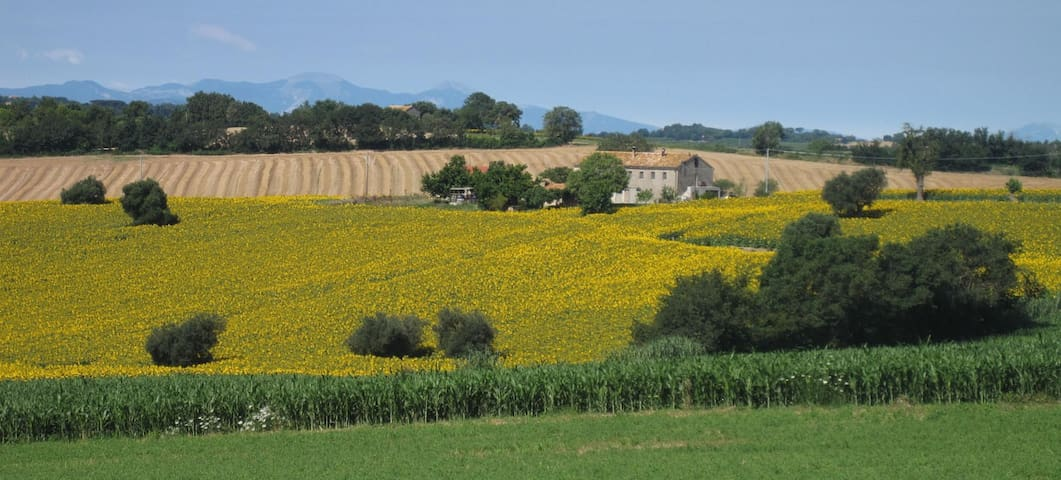 Casale Nicole / appartamento con giardino - Montemarciano - Rumah