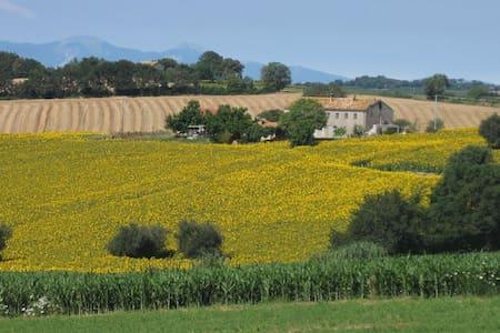 Casale Nicole / appartamento con giardino - Montemarciano