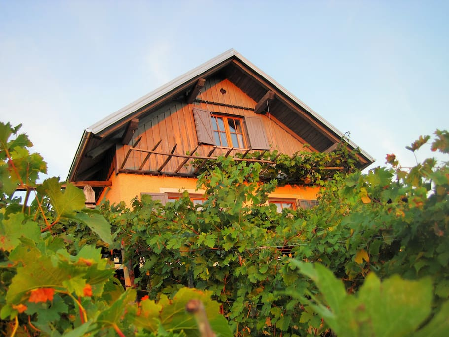 This is our traditional vineyard cottage, ready especially for you to accomodate in during your exploring tour around Slovenia
